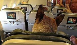 Veja 7 dicas para planejar uma viagem com seu pet
