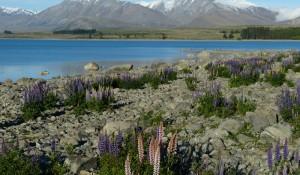 Nova Zelândia passa a exigir visto para entrada de turistas