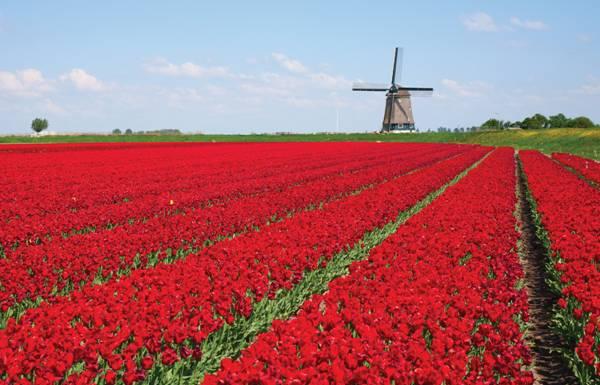 A operadora leva viajantes para o destino holândes com o maior parque das flores do mundo