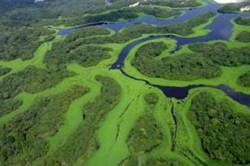 Setor de cruzeiros deve gerar R$ 40 milhões para economia do Amazonas