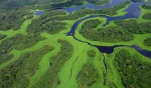 Conheça, em vídeo, os atrativos do Amazonas
