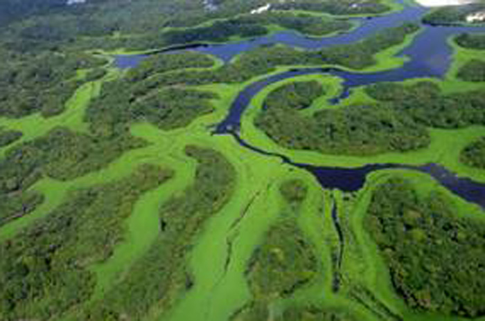 Anavilhas (Amazonas)