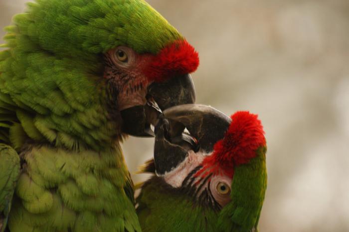 Araras Parque das Aves Foz do Iguaçu