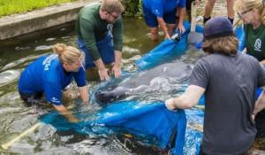 SeaWorld atinge marca de 30 mil animais resgatados desde a fundação