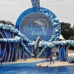 Dolphin Days é o noso show do SwaWorld Orlando
