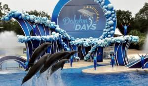Busch Gardens e SeaWorld têm novos shows; veja fotos
