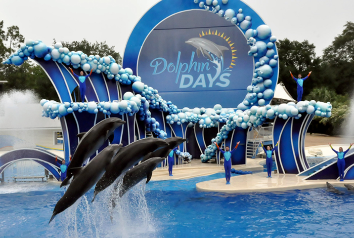 Dolphin Days é o novo show do SeaWorld