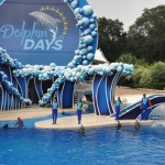 O show tem a participação de quatro golfinhos e quatro treinadores