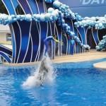 Treinador e golfinho nadando juntos