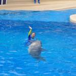 Treinadora nadando com um dos golfinhos