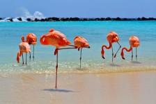 Aruba amplia zonas de Wi-Fi livre