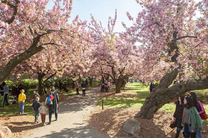 Cherry Blossom Festival - Tagger Yancey IV