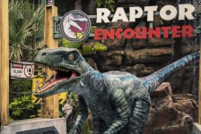 Raptor Encounter no Universal Studios ganha nova integrante