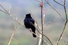 Bahia busca impulsionar turismo de observação de aves