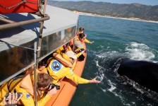 Com passeios embarcados proibidos, temporada de Baleias Francas tem início em Santa Catarina