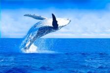 La Torre oferece passeio de observação de baleias jubarte