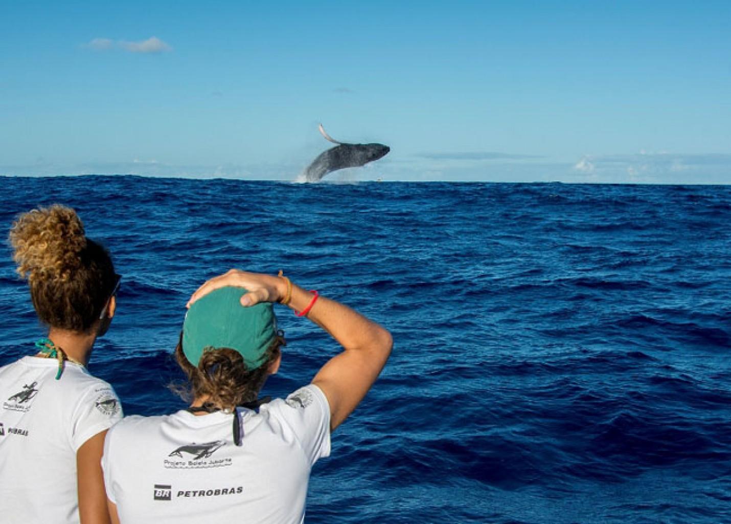 Juiz do TRF-4 libera observação de baleias francas em Santa Catarina
