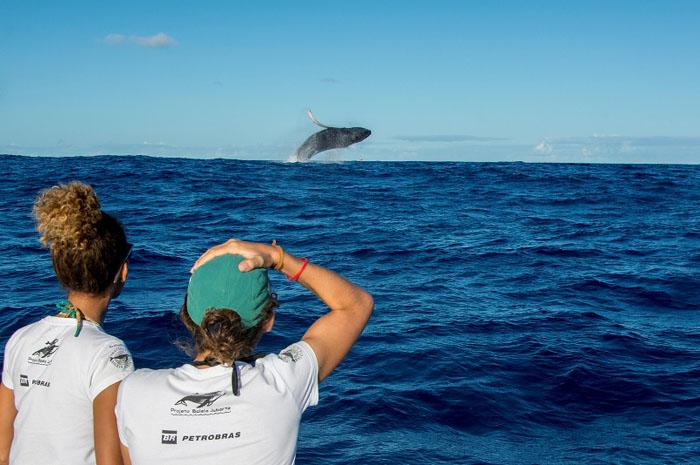 observação de baleias abrolhos Foto Instituto Baleia Jubarte (2)