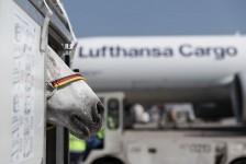 Lounge da Lufthansa, em Frankfurt, recebe mais de 1 bilhão de animais em dez anos