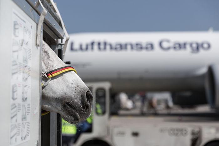 Lufthansa Cargo Animal Lounge, localizado no Aeroporto de Frankfurt