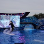 Show da Shamu no SeaWorld