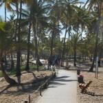 Coqueiros enfeitam a linda orla de Costa do Sauípe