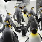 Cerca de 320 pinguins estão no SeaWorld e fazem a alegria dos visitantes