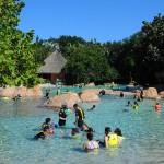 Discovery Cove é um parque reconhecido por todo o seu cuidado e interação com animais marinhos