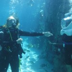 Mergulho de escafandro é uma experiência inesquecível