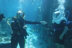 M&E mergulha e passeia pelo Discovery Cove em media fam do SeaWorld; fotos