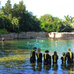 Para interação com golfinhos, Discovery Cove reúne visitantes em grupos