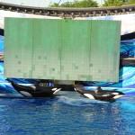 Show da Shamu é clássico e um verdadeiro sucesso do SeaWorld