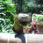 Uma das 50 espécies de aves do aviário do Discovery Cove