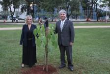 Brasil Convention promove plantio de árvore símbolo de Brasília
