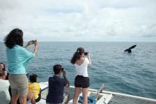 Espetáculo de baleias jubartes no litoral baiano segue até novembro