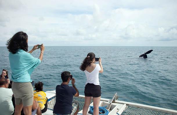 Para garantir o bem-estar dos animais, os turistas passam por uma palestra antes do embarque