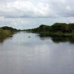 Com sorte, os turistas podem encontrar os alligators durante o passeio