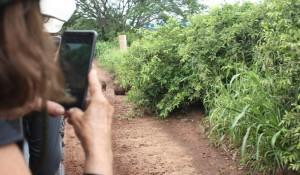 Conheça o roteiro da Transmundi pelo Pantanal Sul-Mato-Grossense; fotos