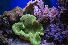 MSC Fundation lança campanha em prol da preservação dos recifes de corais