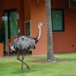 Emas circulam livremente pelos jardins do resort