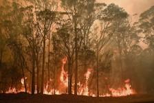 Emirates ajuda na recuperação da Austrália após incêndios florestais