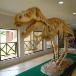 Réplica de dino a partir de fósseis encontrados na Chapada