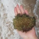 Corais da Praia do Forte