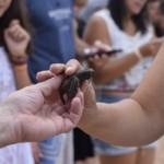 Hóspedes entram em contato com filhotes de tartarugas marinhas