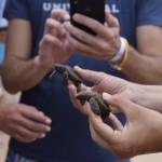 Os hóspedes podem entrar em contato com as tartarugas entre os meses de setembro e março, quando é a época de reprodução da espécie