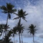 Toda a área do empreendimento conta com coqueiros que deixam o ambiente ainda mais atrativo