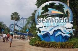 SeaWorld registra prejuízo líquido de US$ 105 milhões no 2º trimestre