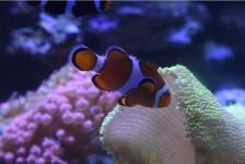 AquaRio amplia horário de visitação nos fins de semana de janeiro