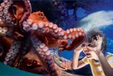 SeaWorld lança site para curtir atrações dos parques virtualmente