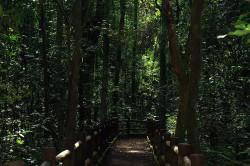 Bolsonaro autoriza concessão dos parques nacionais de Brasília e São Joaquim